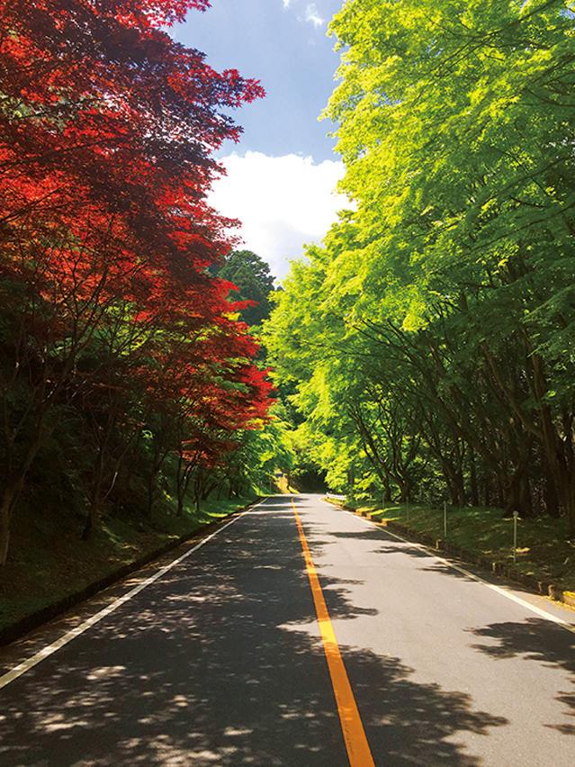 <strong>【関西エリア】</strong><br /><span style='font-size:1.2em;'><strong>京都府・奥比叡</strong></span><br /><br />「関西エリアで絶景といえば『奥比叡ドライブウェイ』。琵琶湖八景の一つである比叡の樹林や霊峰比叡山の史跡を同時に巡ることもできるルートで、緑豊かな道が約12kmほど続いている。1000本を超える桜も植えられているので、春先に訪れるのがベストだろう」