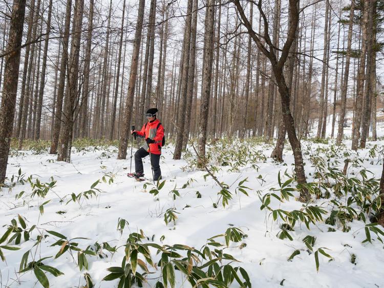 ザクザクと雪を踏みしめながら森の中を散歩。雪の上で寝そべると雄大な自然との一体感が楽しめる。