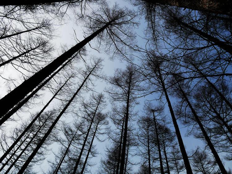 静まりかえった雪山の中は別世界。立ち止まって上を見上げれば、木々の隙間から覗く空の青がまた美しい。