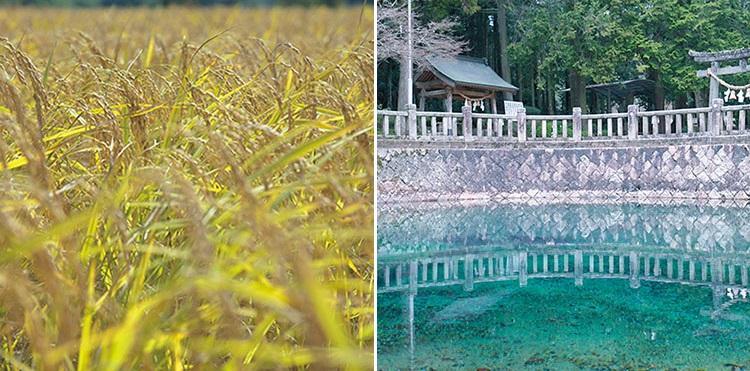 "<b>最高の米と、最高の水。地元を最大限に生かしたSAKE</b></br>山口県は酒米としては最高と称される""山田錦""の産地。仕込み水として神様の水と称される""弁天の湧き水""を使って生まれるOHMINEのSAKE。"