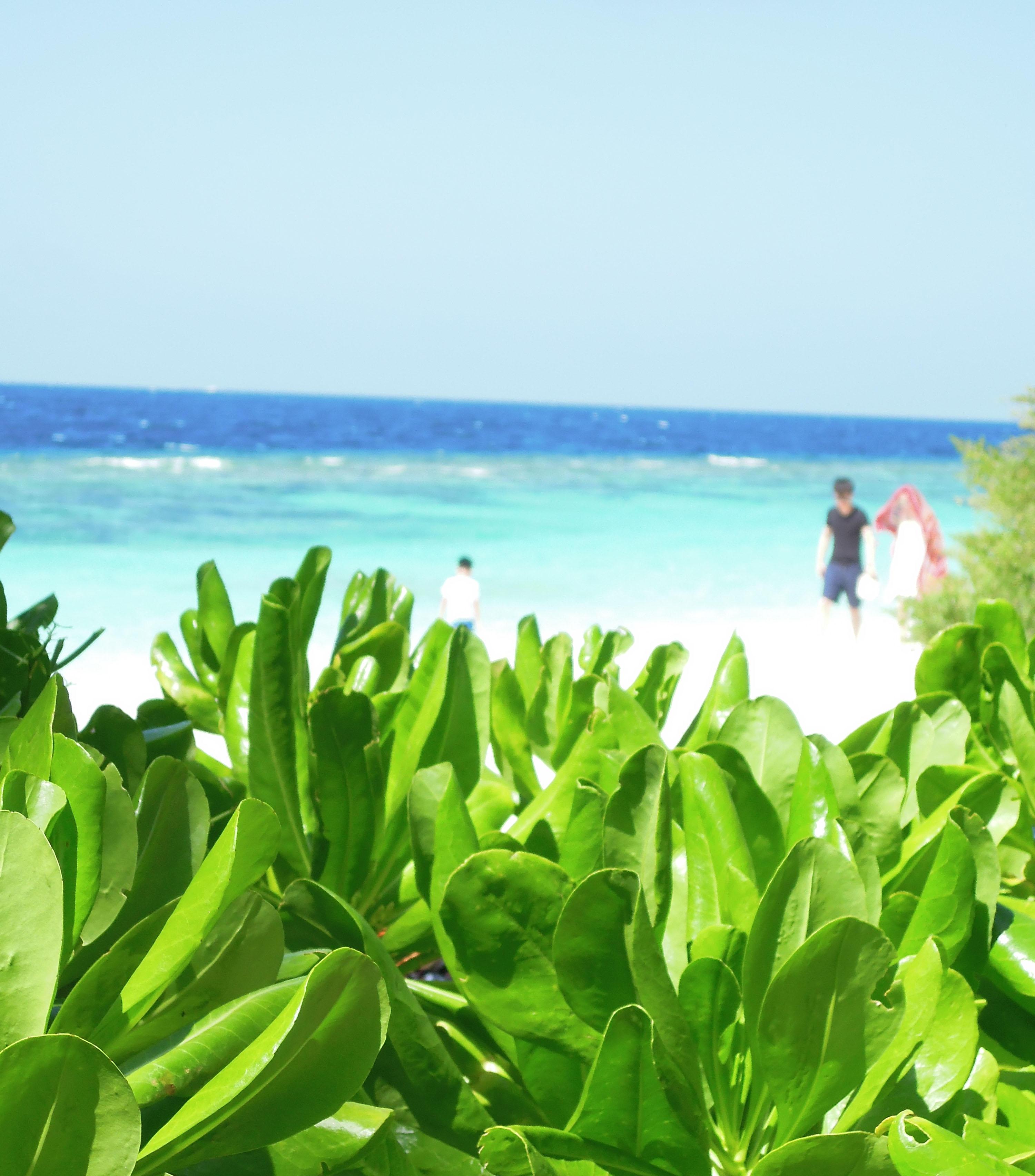 島内には自然がいっぱいだ。