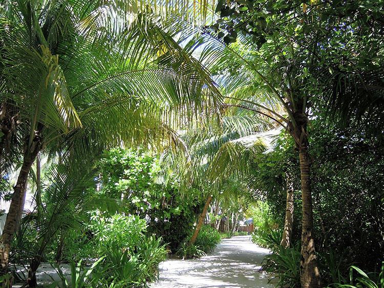 島内では自然環境をできる限り壊さないように努力している。