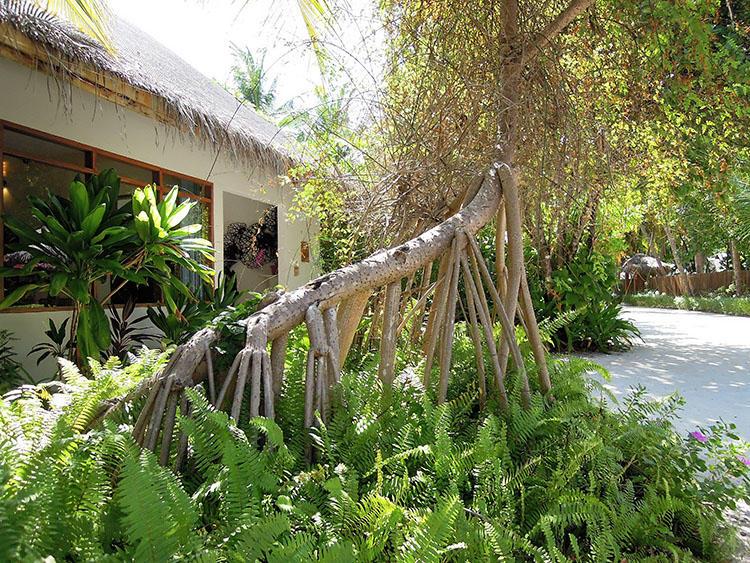 島内のあちこちに生えている植物。ぶら下がっているのは枝ではなく根っこだ。