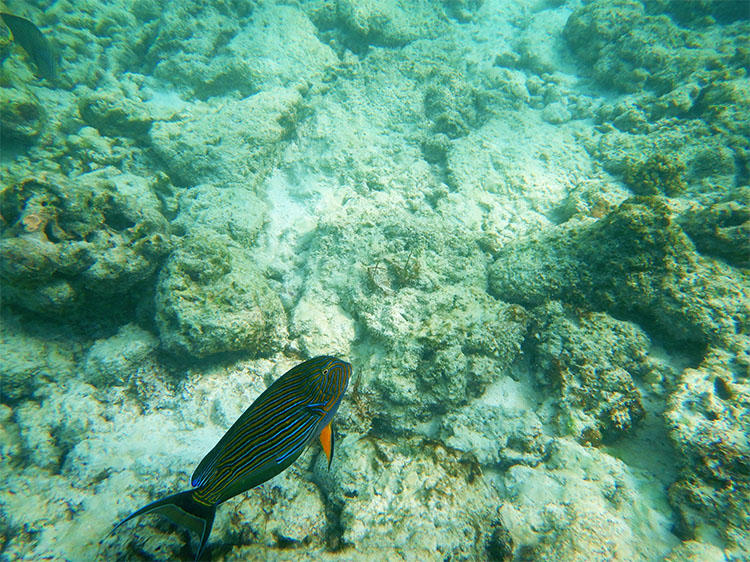 魚たちはあまり人を怖がらない様子だった。
