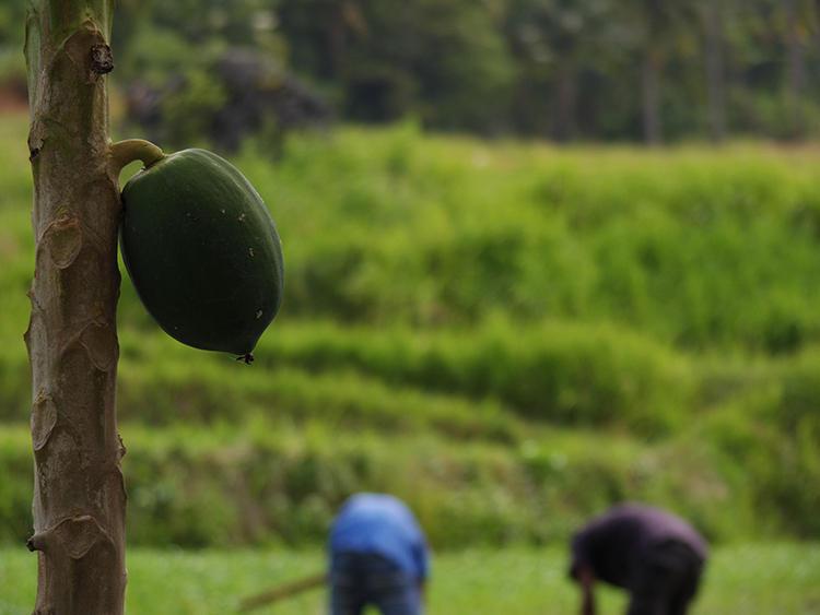 隣接する田んぼでは田植えが行われていた。実にのどかな風景だ。
