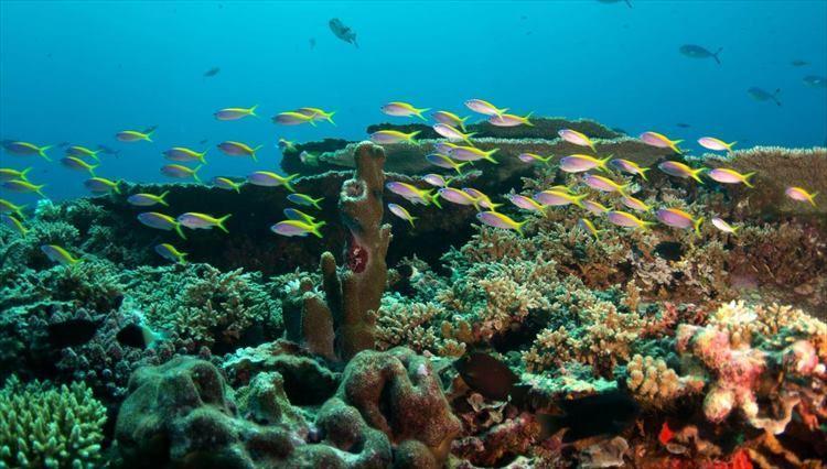 美しいハウスリーフもアマリの魅力。海の中は、まるで天然の水族館。