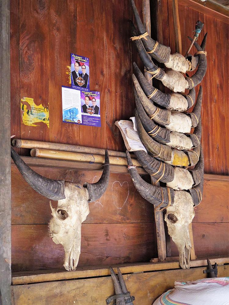 伝統的な儀礼で捧げられた水牛の骨が民家の軒先に飾られている。