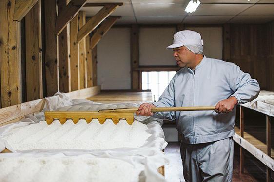 背の高さや籾が落ちやすいという理由で幻となっていた酒米「広島錦」が県内の農家の協力を得て復活。