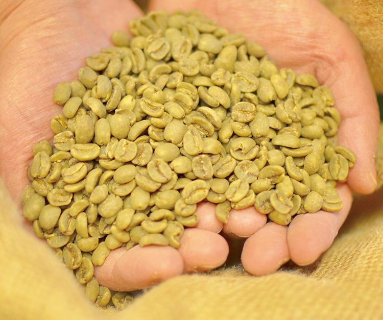 カフェイン除去後の豆。加工後でも豆は旨味は保ったまま。