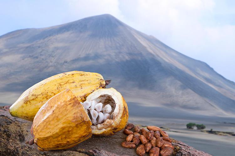 火山島で取れる超希少なカカオから作られる