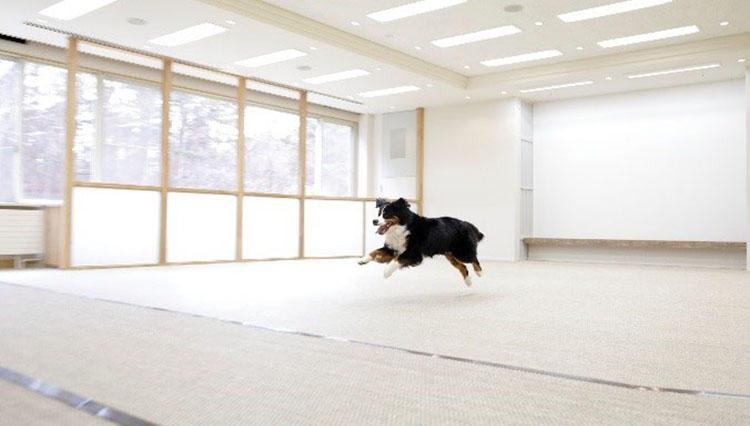 八ヶ岳山麓の自然に囲まれて、愛犬と泊まれるリゾートホテルに宿泊体験!