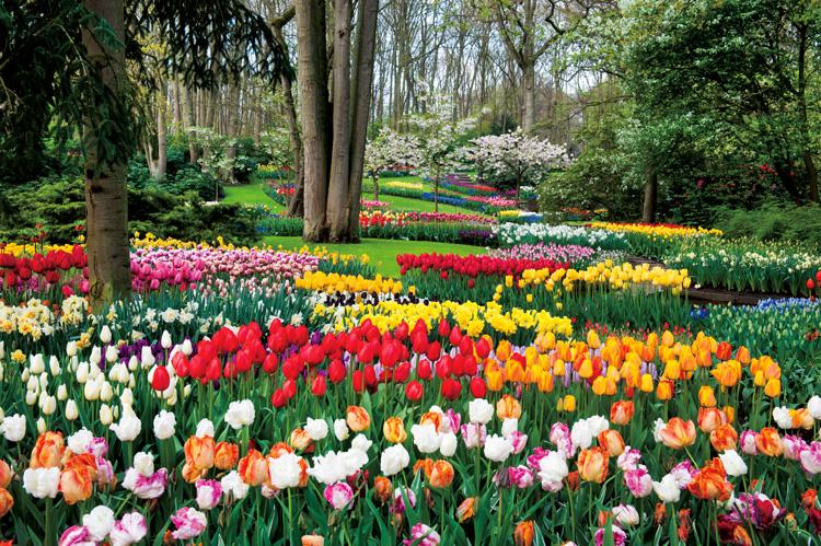 フェルメールの名作「真珠の耳飾りの少女」を独占鑑賞!オランダ・ベルギー 花と芸術探訪8日間の旅