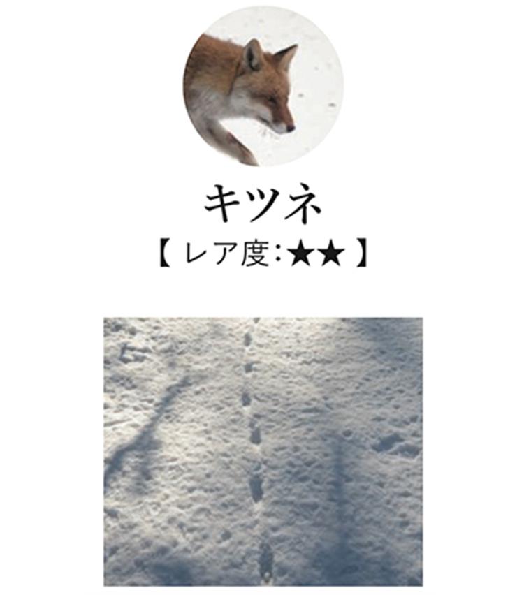 <p>日本では古くから益獣として親しまれるキツネは、犬と似た足形を残す。区別するポイントは、足跡の並び方だ。 左右の足跡にぶれがなく、ほとんど一直線上に並ぶのが特徴。</p>