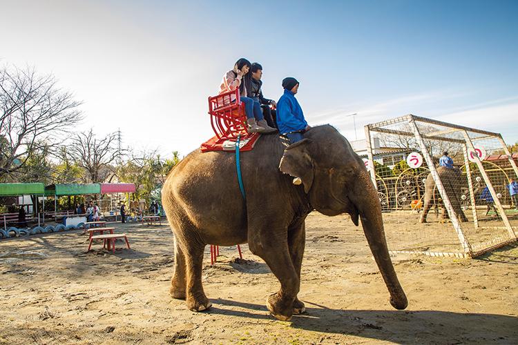 象の背に乗り、異国の文化を学ぶ大人の遊び