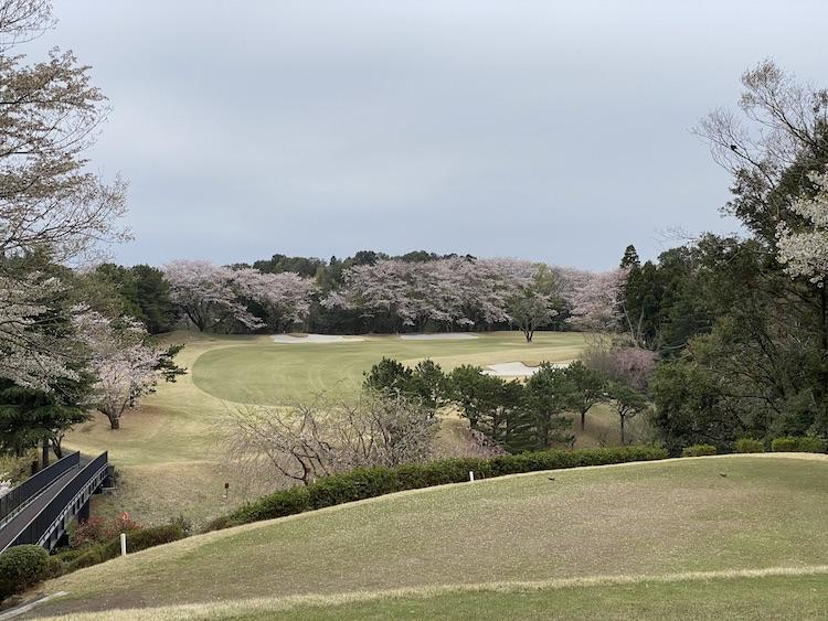 <p>コースには桜の木が多く、春にはお花見しながら散歩する気分でプレーできます。こちらは右ドッグレッグの15番パー4</p>
