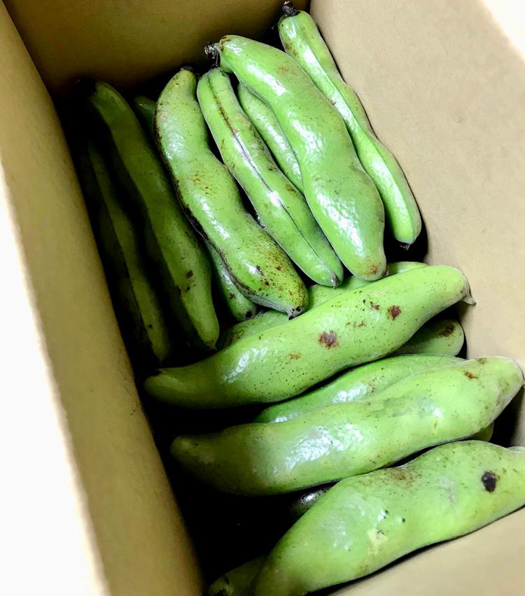 <p>1. 材料は、そら豆をお好きなだけ。そら豆はさやが黒ずんでないものを選ぶ。</p>
