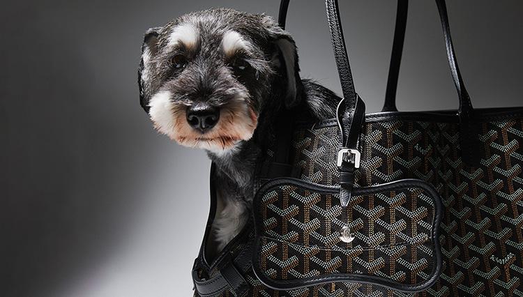 愛犬がゴヤールから「こんにちは!」できる新作トートバッグが登場